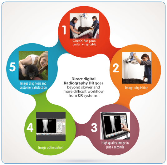 Simplified workflow on Direct digital radiography ClaroX DR Mixto 1417. Companion animals