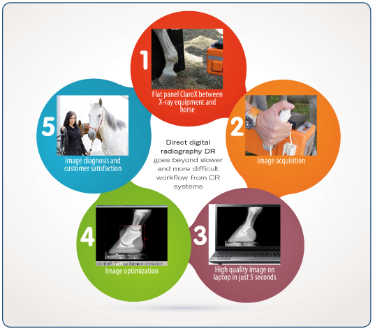 Simplified workflow on Direct digital radiography ClaroX DR Mixto 1417. Equine